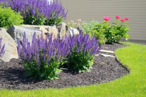 champlin area landscaping