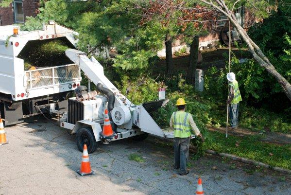 champlin tree removal