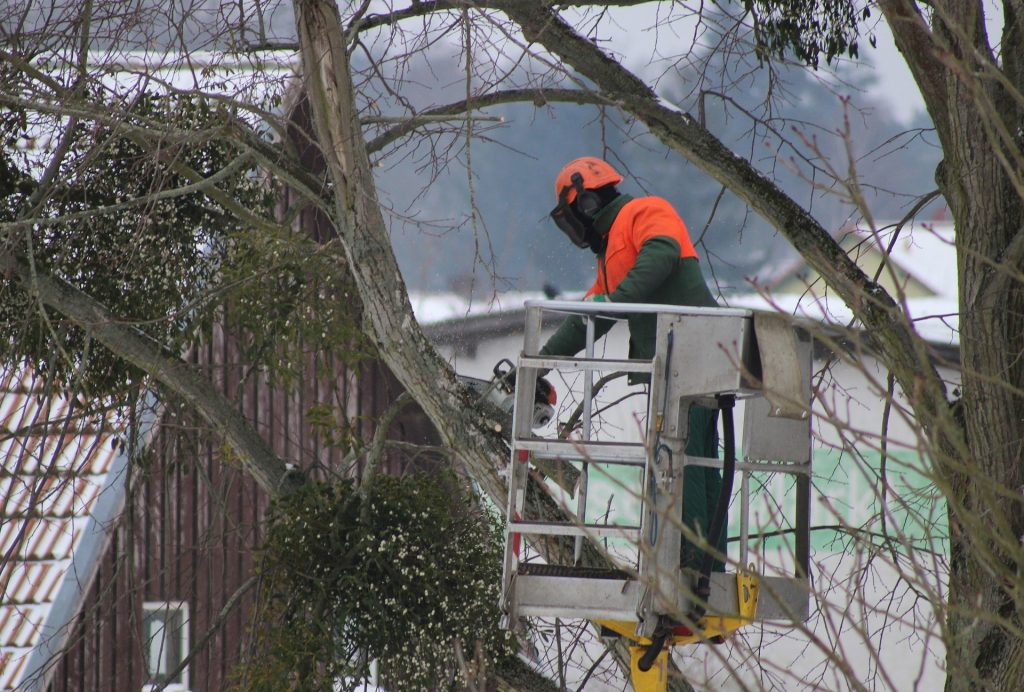 tree branch pruning in champlin